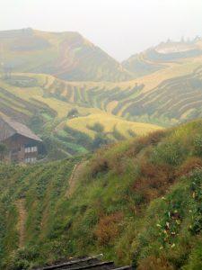 china-rice-fields