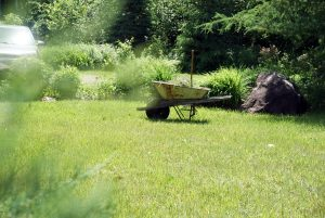 wheel-barrow-grass